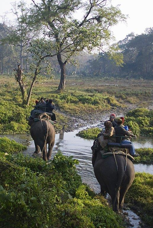 Elephant ride India_crop